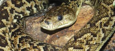 snake5a