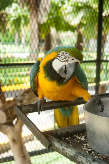 Macaw-450x675