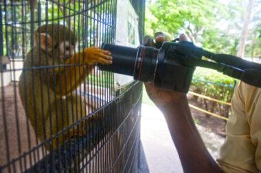 Squirrel-Monkey-450x300